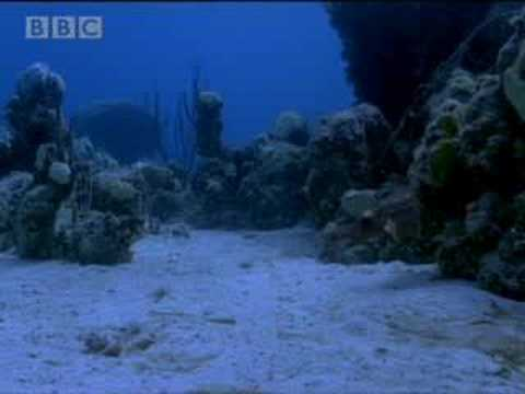 Sharks vs dinosaurs - BBC