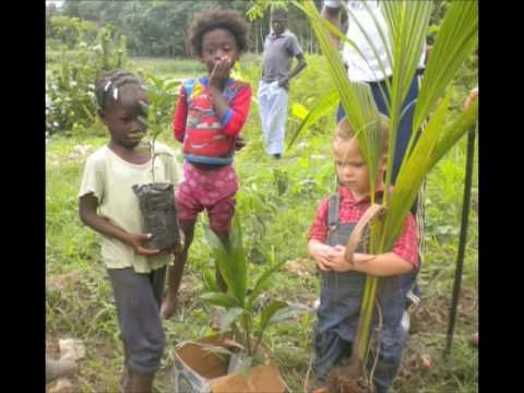 Reforesting Haiti
