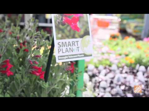 Smart Planet Drought Tolerant Plants