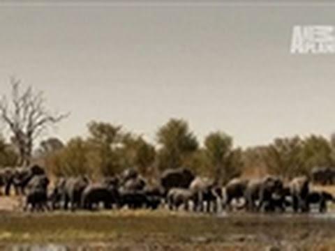 Wild Kingdom- An Elephant Oasis