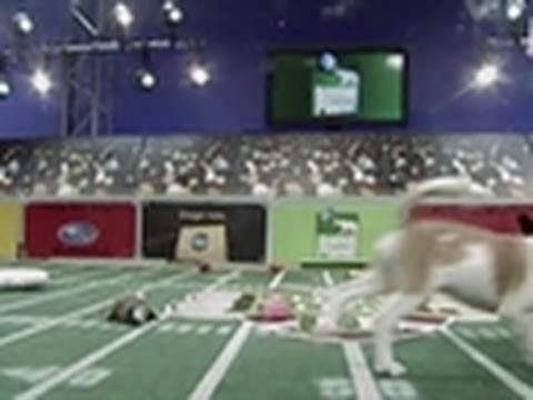 Puppy Bowl II: European Invasion
