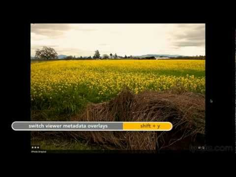 Working in Aperture's full-screen mode | lynda.com tutorial