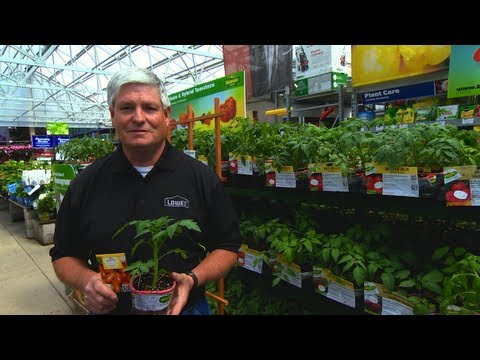 What is a Determinate Plant? - Quick Tip