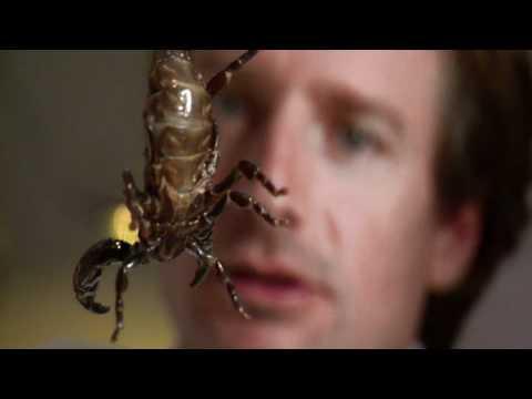 NOVA | Venom: Nature's Killer | PBS