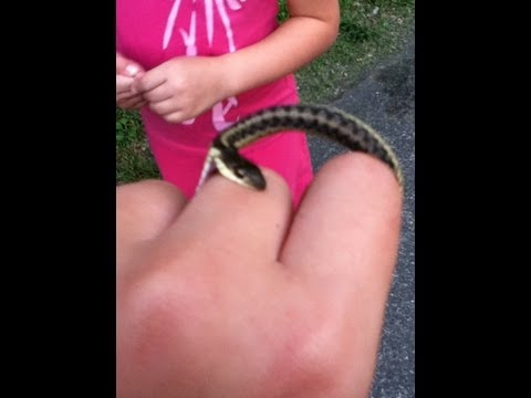 Snakes and snapping turtles CLOSE UP