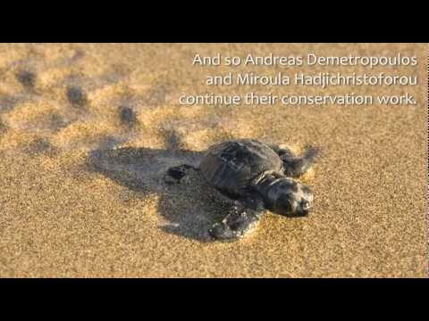 The World: Sea Turtles in Danger in Cyprus