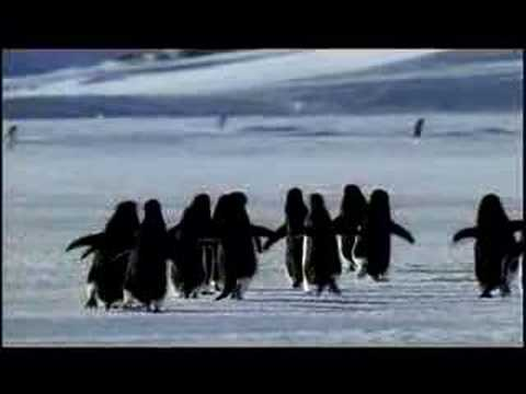 PLANET EARTH -- Antarctic Penguins