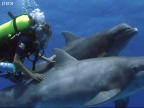 Swimming with dolphins - Born to Be Wild: Dolphins with Tamzin Outhwaite - BBC