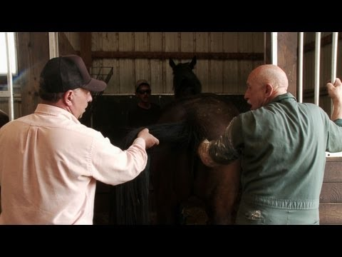 The Incredible Dr. Pol - The Incredible Dr. Pol: Mare Pregnancy Tests