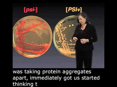 Susan Lindquist Part 1: Protein Folding and Prions English Subtitle
