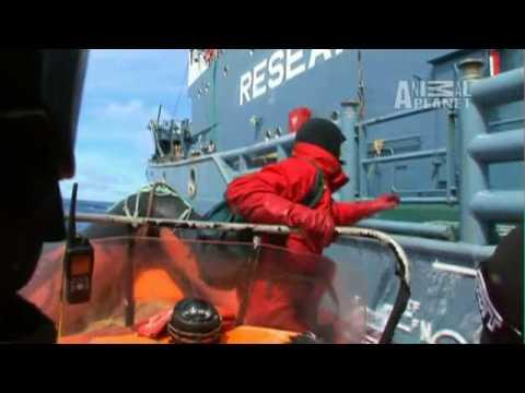 Whale Wars: FAQ - What Makes a Sea Shepherd?