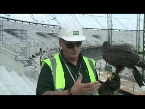 Willow, the Olympic Stadium hawk - London 2012