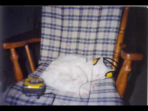 Sleeping Kitty ; Cute Kitty sleeping with headphones!