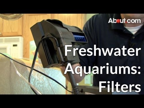 Types of Filters for Freshwater Aquariums