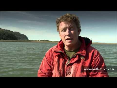 Sardine Run 2011 Roundup