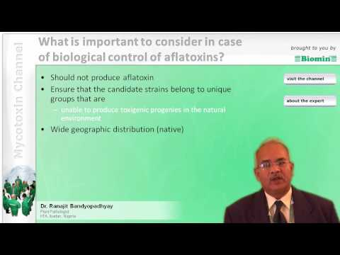 What is important to consider in case of biological control of aflatoxins?