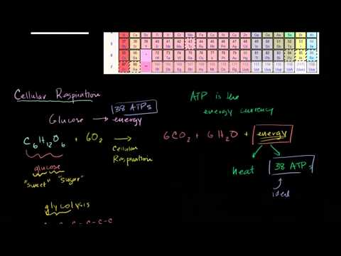 Saylor BIO304: Introduction to Cellular Respiration