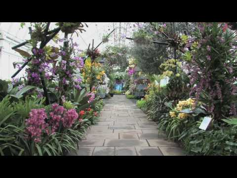 The New York Botanical Garden Presents, The Orchid Show: Brazilian Modern