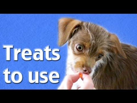 Treats to use- Most frequently asked question #1- dog training clicker training