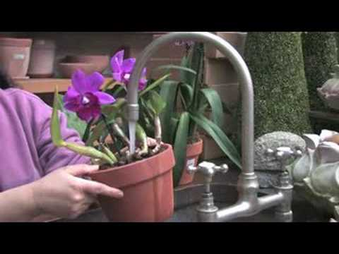Sonia's Garden — Basic Orchid Care