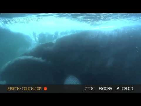 Unforgettable animal encounter: Swimming eye to eye with a whale
