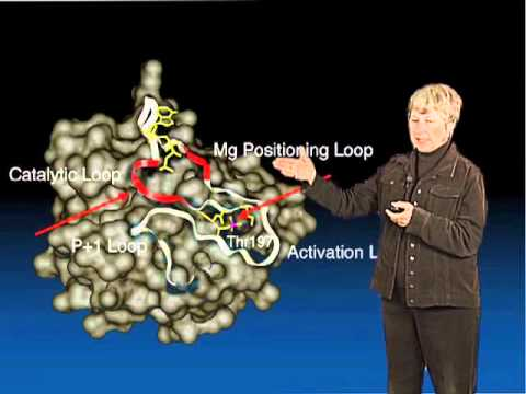Susan Taylor Part 2: Architecture of a Protein Kinase
