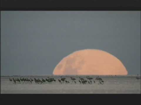 NATURE    Kalahari: The Great Thirstland   March   PBS