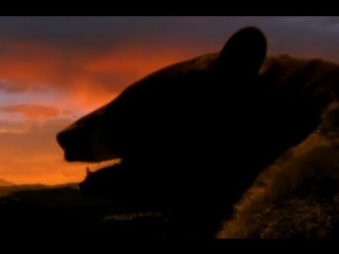 Why bears hibernate - Big Sky Bears - BBC