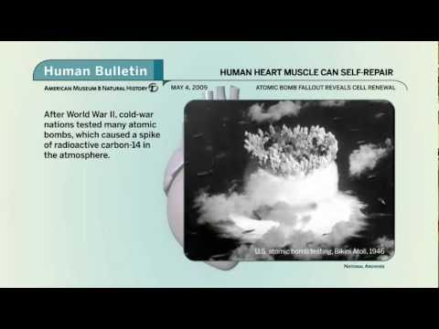 Science Bulletins: Human Heart Muscle Can Self-Repair