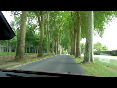 Trees Marching to the Château