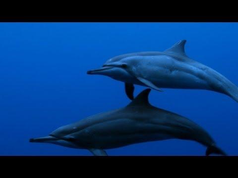 Untamed Americas - Spinner Dolphins