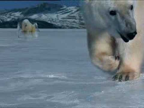 Polar bear ice hockey - BBC animation