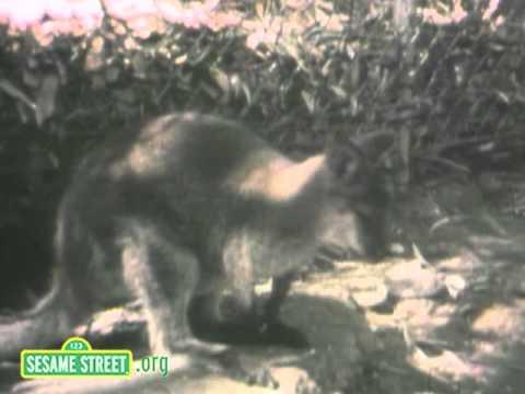 Sesame Street: Kangaroo Blues