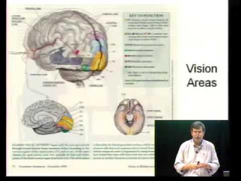 Saylor PSYCH101: Biological Bases of Mind and Behavior III