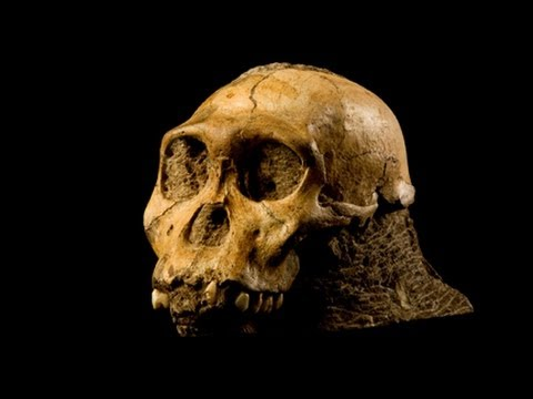 National Geographic Live! - Part Ape, Part Human: The Fossils of Malapa