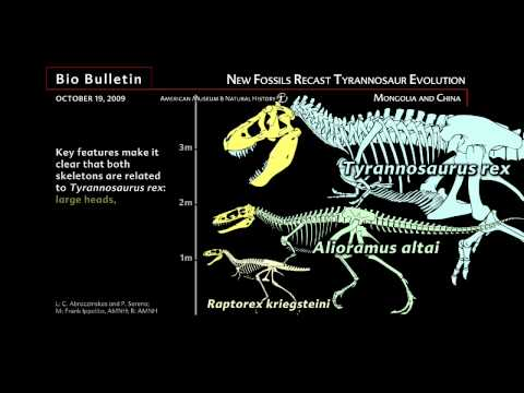 Science Bulletins: New Fossils Recast Tyrannosaur Evolution
