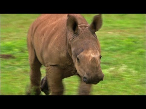 Running with Rhinos