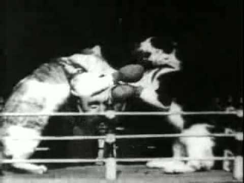The Boxing Cats (1894)