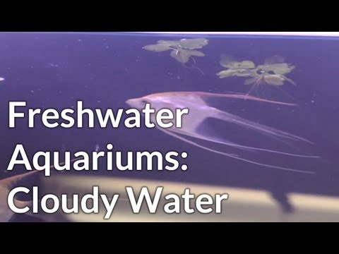 Why Do  Freshwater Aquariums Become  Cloudy