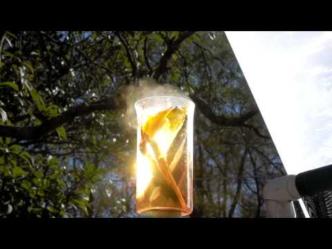 SOLAR TEA FRESNEL LENS BOIL WATER LOQUAT TEA RESVERATROL