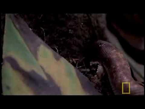 Strange-headed Snakes