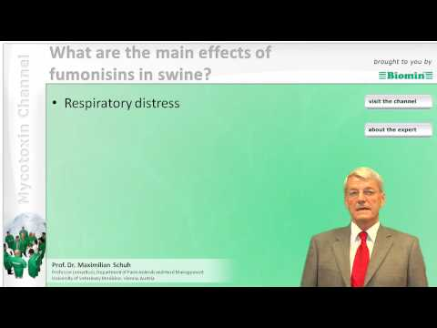 What are the main effects of fumonisins in swine?