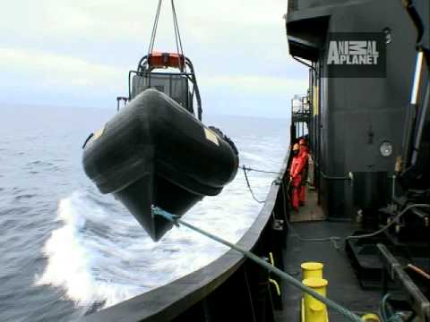 Whale Wars Deleted Scene: Launching the Outboard Boats