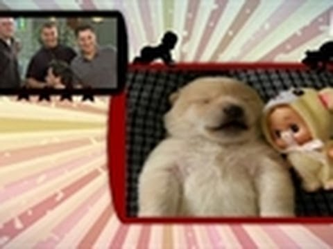 Sleep Talking Puppy | Puppies vs. Babies
