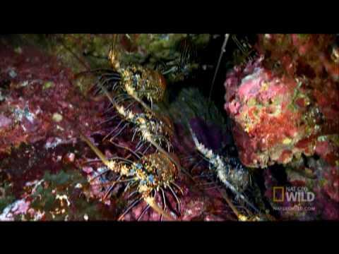 Underwater Serengeti