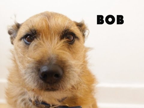Slo-Mo Dog Video: Bob