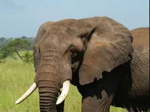 Name The Animal - Elephant Slideshow