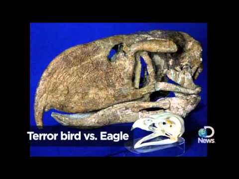 Terror Bird Fought Like Muhammad Ali