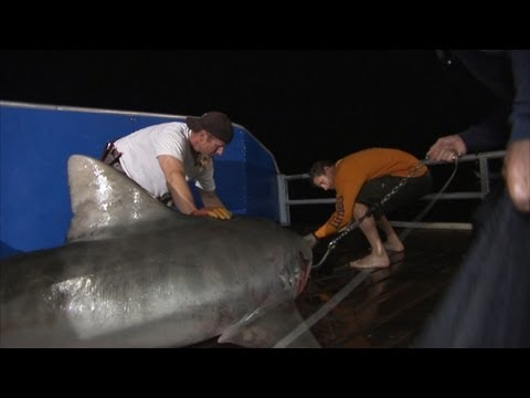 Shark Men - Night Tagging