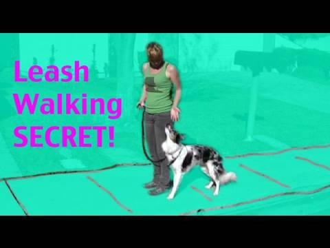 Secret dog training tip- teaching 'back up' for leash walking